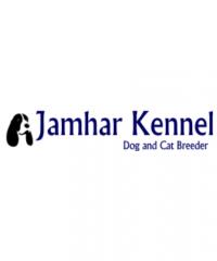 Pet Shop / Store, Dog n Cat Breeder in Kothrud, Deccan – Jamhar Kennel